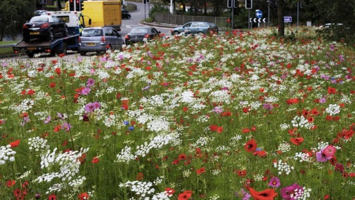 MARCH ACTION: Rewild our verges