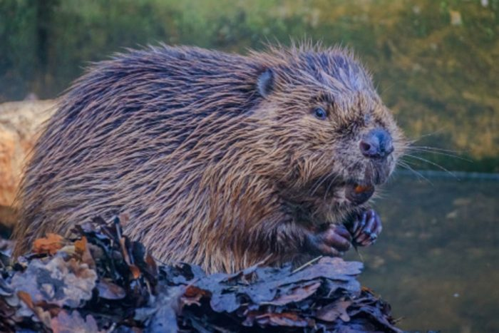 Join the Rewilding Britain Network this Autumn